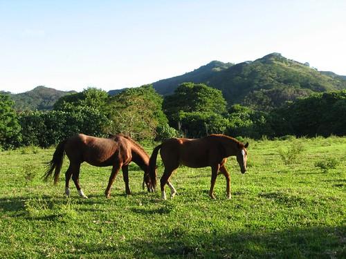 chevaux 2