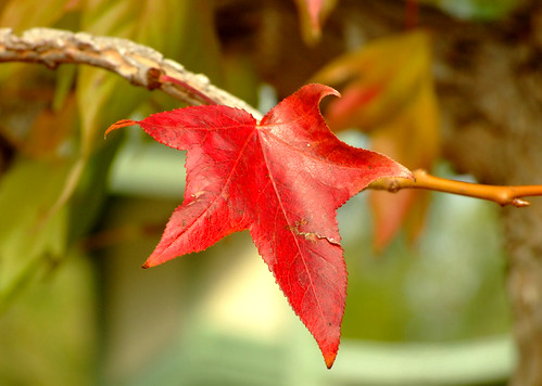 Autumn leaf (by autumn_leaf)