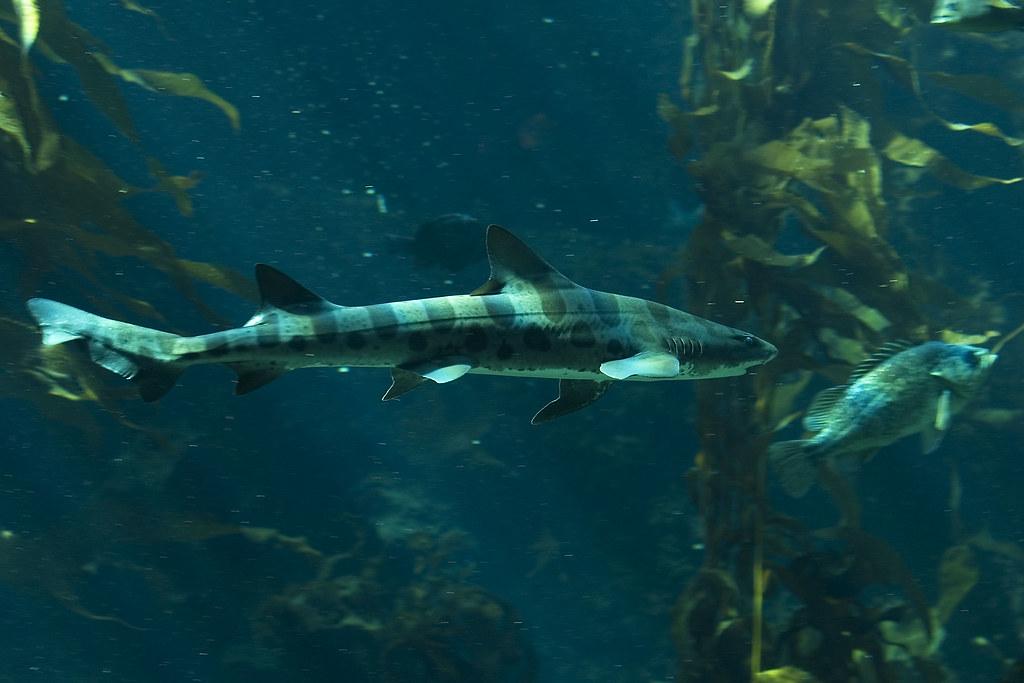 SharkHunting_8581