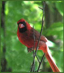 I'm glad you're my friend (potomacstar - give, it shall be given to you...) Tags: bird friendship searchthebest cardinal extremecloseup blueribbon peopleschoice naturegroup wingedbeasts naturesfinest blueribbonwinner extremecloseups supershot a naturearoundyourhouse flickrsbest sunkissedbirds spectacularnature specanimals theonesyoulove beautifulcapture mywinners mywinner abigfave flickrgold shieldofexcellence ultimateanimalphotography colorphotoaward impressedbeauty aplusphoto impressedbybeauty irresistablebeauty superbmasterpiece beautyineyeofbeholder goldenphotographer avianexcellence excellenceinavianphotography diamondclassphotographer ultimateanimals photosandcalendar simplyyourbest flbest excellenceinavianphoto top20red photoandcalendar searchandreward excellentphotographerawards excellentphotographer flickrelite naturesbeautifulwonders fldiamond thatsclassy naturenolimits givemeratings onlynatureaward award1post2