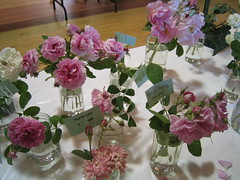jars of romance