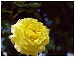 Rose 070520 #09