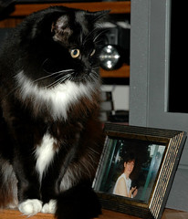 Kitty Sits Next to a Photo of Her Mom! (Shawn's Kitty (Busy Healing!)) Tags: cat kitty meow shawn