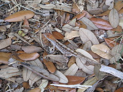 camoflage lizard
