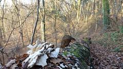 Pilze und Moos - Wandern auf dem Saynsteig