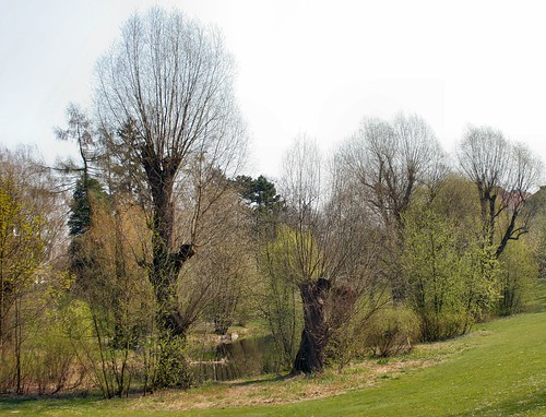 Frühling im Triestpark