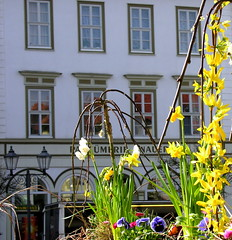Spring in Hildburghausen (Linda6769 (hiking)) Tags: two flower reflection window fountain lamp germany easter four lampe town spring fenster decoration row thuringia well yellowflower forsythia marketplace written ostern reflexion eight vier osterdekoration easterdecoration osterzeit hildburghausen gelbeblume geschrieben gartenblume osterfest geschriebenes reflectiononwindowpane