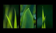 Puntas Verdes