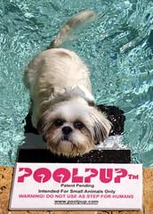 PoolPup