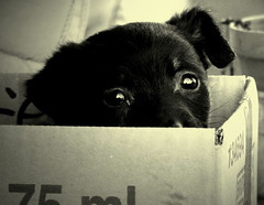 Stojanka (Aleksandra Radonic) Tags: street bw dog black cute abandoned found sadness interestingness pain interesting eyes alone loneliness serbia social explore blackdog forgotten streetphoto balkans emotional left emotions coolest contemplation balkan sadface dogseyes holidaysvacanzeurlaub ipromiseiwill
