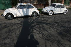 White Bugs (sonofsteppe) Tags: road street old shadow white tree car vintage bug volkswagen concrete hungary photographer budapest gray rusty plaster explore shade collector maniac sonofsteppe pusztafia urbanlifeoftrees