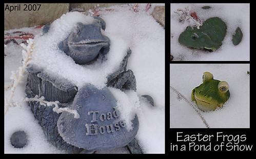 Frog Triptych