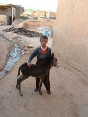 Boy and young donkey (peggyhr) Tags: boy nw village open mud iran young donkey drain