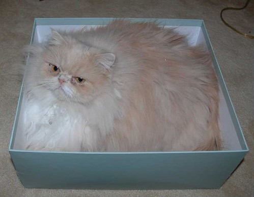 Cropped Mozart in a Box