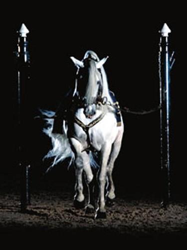 caballo blanco poster