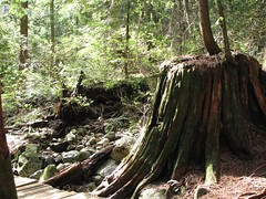 nurse stump (JoshNV) Tags: mountain canada bike vancouver canon bc grouse northshore fromme nsmb coaxeus