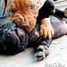 子犬:Puppy Love