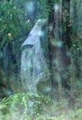 woodsghost.jpg