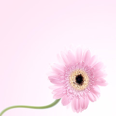 Flirtatious (mactastic) Tags: pink light white flower green nature yellow wow square one petals interestingness spring flora bravo soft pretty solitude sweet feminine pastel perspective rosa peaceful gerbera serenity daisy bloom serene delicate isolated flore muted gerberadaisy top500 explored interestingness24 i500 mactastic abigfave diamondclassphotographer flickrdiamond empyreanflowers explore24april07