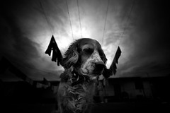 Sad Dog - Part II (Luis Montemayor) Tags: sky blackandwhite dog blancoynegro clouds mexico perro cielo nubes cloths vecindad ropa myfavs morelos artlibre