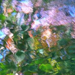 Flowers for Al Gore! (Denis Collette...!!!) Tags: canada reflection river bravo kyoto joy rivire reflet qubec algore environment joie environnement wildriver magicdonkey deniscollette diamondclassphotographer riviresauvage flowersforalgore world100f