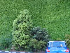 IMG_4236 (macco) Tags: auto blue tree car japan automobile renault  nippon yokohama kanagawa      matra avantime