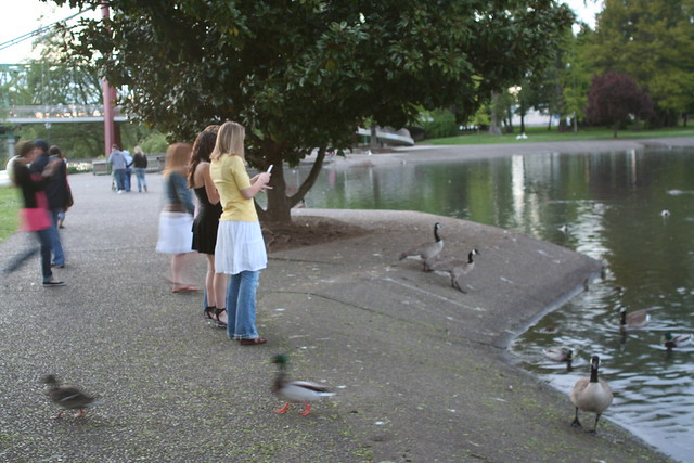 Girls Feeding Birds and Photgraphing the Results
