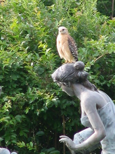 Hawk and Statue