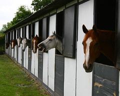 There's One in Every Group! (BennyPix) Tags: copyright horse animal barn digital canon geotagged eos blog interestingness funny texas farm tx  humor houston location explore photoblog laugh blogged equestrian idf chronicle mapped loh 30d 24hrs flickrexplore houstonchronicle irishdayfarm allrightsreserved 24hoursofflickr lenshouston unauthorizeduseprohibited blogschroncomlenshouston