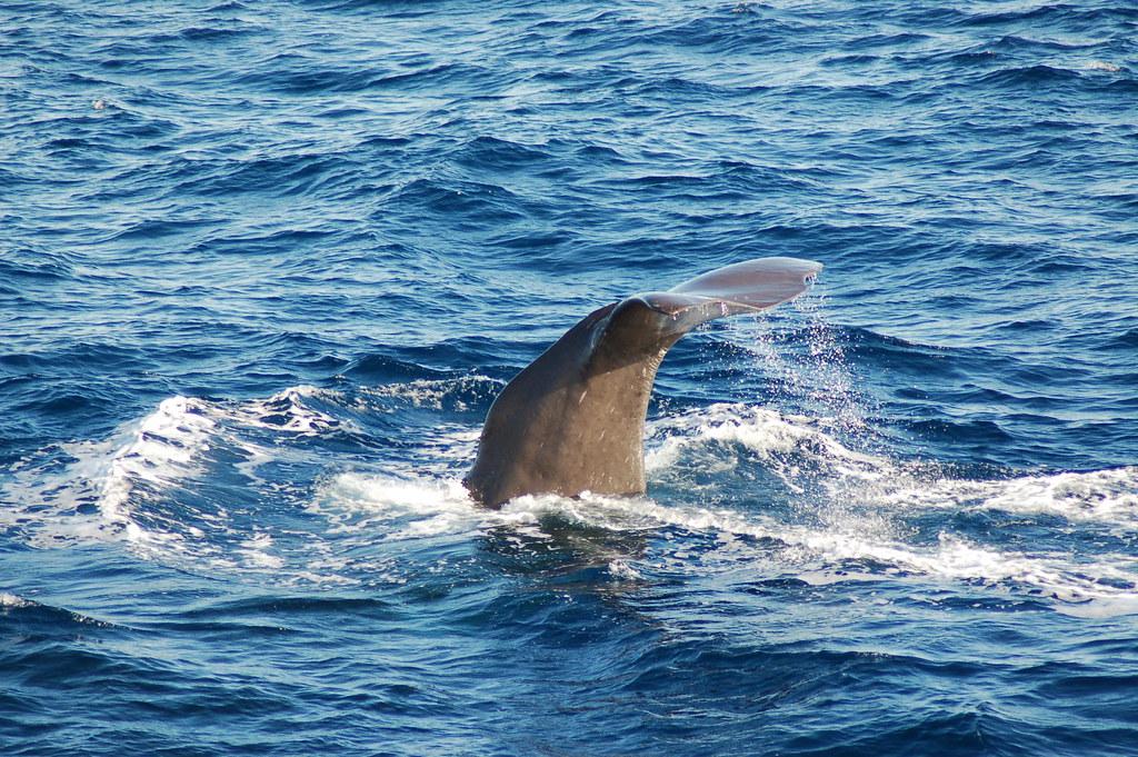 sperm whale  4 of 5 photos