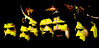 Hulis Wigmen Papua New Guinea - Mount Hagen (Eric Lafforgue) Tags: pictures festival photo picture culture tribal papou tribes png tribe papuanewguinea papua ethnic 0002 hagen headdress singsing huli papu ethnology tribu oceania 巴布亚新几内亚 ethnologie coiffe oceanie ethnique papous papuaneuguinea lafforgue papuanuovaguinea wigman パプアニューギニア ethnie ericlafforgue papuan papouasie papouasienouvelleguinée mounthagen mounthagenshow lafforguemaccom anawesomeshot papuans papoeanieuwguinea papuásianovaguiné wigmen hulis mthagenshow ericlafforguecom παπούανέαγουινέα папуановаягвинея papuanewguineapicture papuanewguineapictures paouasienouvelleguinéephoto papouasienouvelleguineephotos papuanewguineanpeople mthagenfestival mounthagenfestival maquillagemounthagen maquillagemthagen makeupmthagen remotetribe papúanuevaguinea augustfestival 巴布亞紐幾內亞 巴布亚纽几内亚 巴布亞新幾內亞 paapuauusguinea ปาปัวนิวกินี papuanovaguiné papuanováguinea папуановагвинеја بابواغينياالجديدة bienvenuedansmatribu