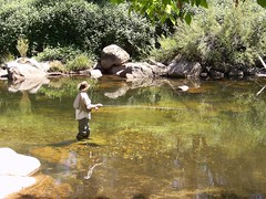 fly fishing (hollis_corey) Tags: water river fishing nsw flyfishing trout snowymountains troutfishing khancoban swampyplainsriver