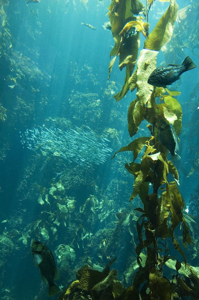 Seaweed_8406