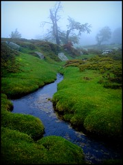 corsican landscape (kiplingflu) Tags: trees holiday green water grass rain fog ilovenature topv333 wind corse gr20 corsica favme rivir anawesomeshot