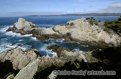©Point Lobos 6