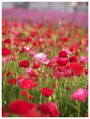 Flowers 070523 #03