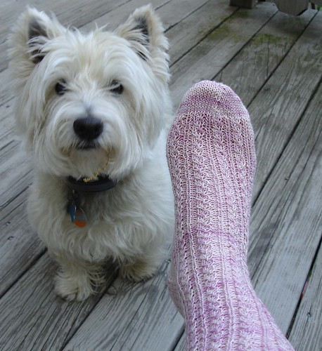Mackenzie and sock