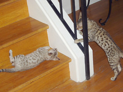 kittens on the stairs