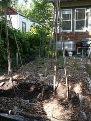 garden mulched vertical