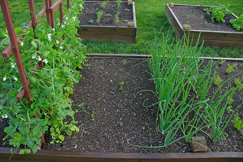 Peas, peppers, onions