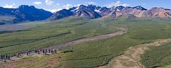 Gazing at the Alaska Range (Unhindered by Talent) Tags: park panorama mountain alaska landscape july 2006 tourist national denali visitor range stitched tundra alaskarange hugin enblend