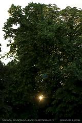 Glimmer of hope (srkirad) Tags: outdoor trees ray light sun flare glimmer sunset belgrade beograd serbia srbija park manje