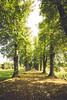 (c) Wolfgang Pfleger-0861 (wolfgangp_vienna) Tags: schweden sweden sverige schonen southsweden marsvinsholms slott marsvinsholmsslott ystad trees allee street parkway park
