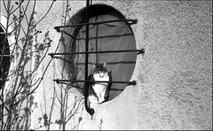 Zorki 4 & Jupiter 8 ... winning combination ! ;/) (schyter) Tags: 4 zorki4 1957 8 jupiter8 25cm kmz redp sverdlovsk4 sovietlightmeter fomapan 200 homemadesoup homemaderecipe d76about stock weighing liquids epson v600 film pellicola analogica analogic rangefinder camera lens bw bn bianconero blackwithe lodigiano lodi analogicait 135 35mm trama monocromo allaperto sovietcamera sovietlens 250 yellow filter