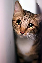 IMG_3320 (jacky elin) Tags: cats brown cat mix tabby jacky