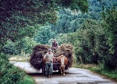 Rural Serbia (AIeksandra) Tags: serbia wildness balkans photojournalism exploreserbia serbianfarmers naturebalkans nature forest