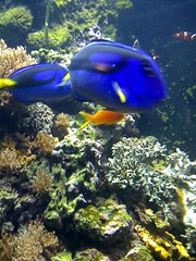 Find Nemo!