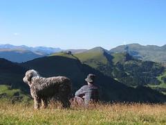 Scatto Passo Sella 2005 (cesare.desilvestro) Tags: italy panorama dog green cane montagne estate prato montain trentino dolomiti cartolina sfondo passosella valdifassa