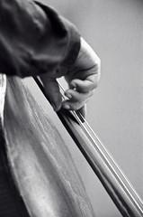 Mingus Fingers (Tom Marcello) Tags: photography bass jazz jazzmusic jazzmusicians jazzconcert charlesmingus jazzplayers jazzphotos jazzphotography jazzphotographs tommarcello