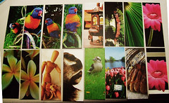 Moo cards available for trade (Vanessa Pike-Russell) Tags: bestof vibrant australia moo mostinteresting portfolio popular 2007 myfaves views100 mootrade